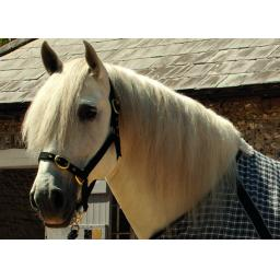 Plain Nylon Head Collars Pony