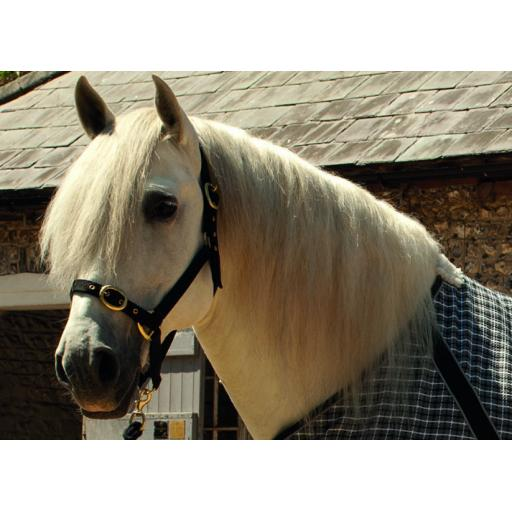 Rhine Gold Nylon Head Collar Full