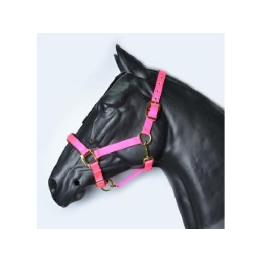 HY Grand Prix Head Collar Pony